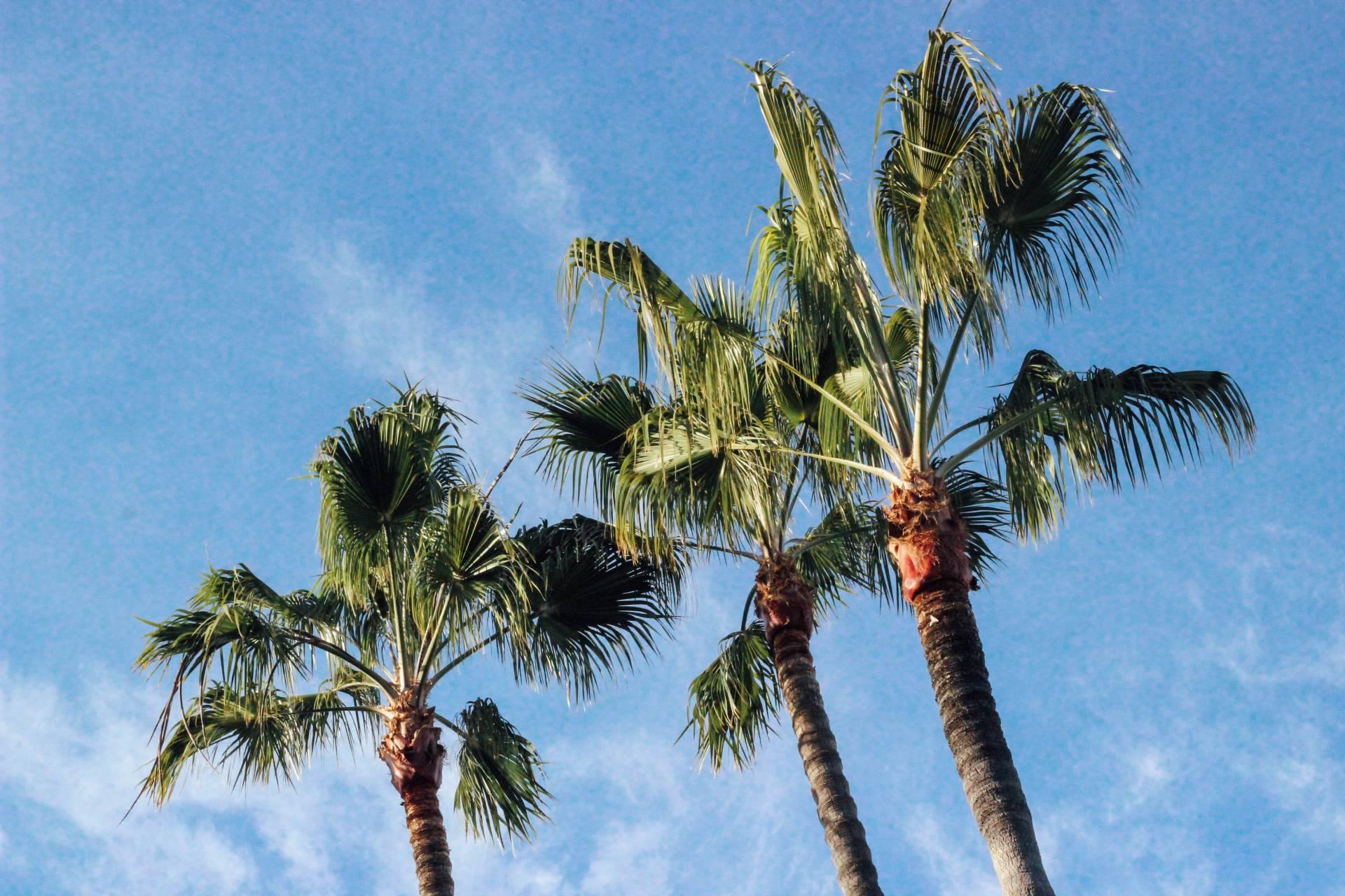 Balboa Island Playlist | Sarah Michiko