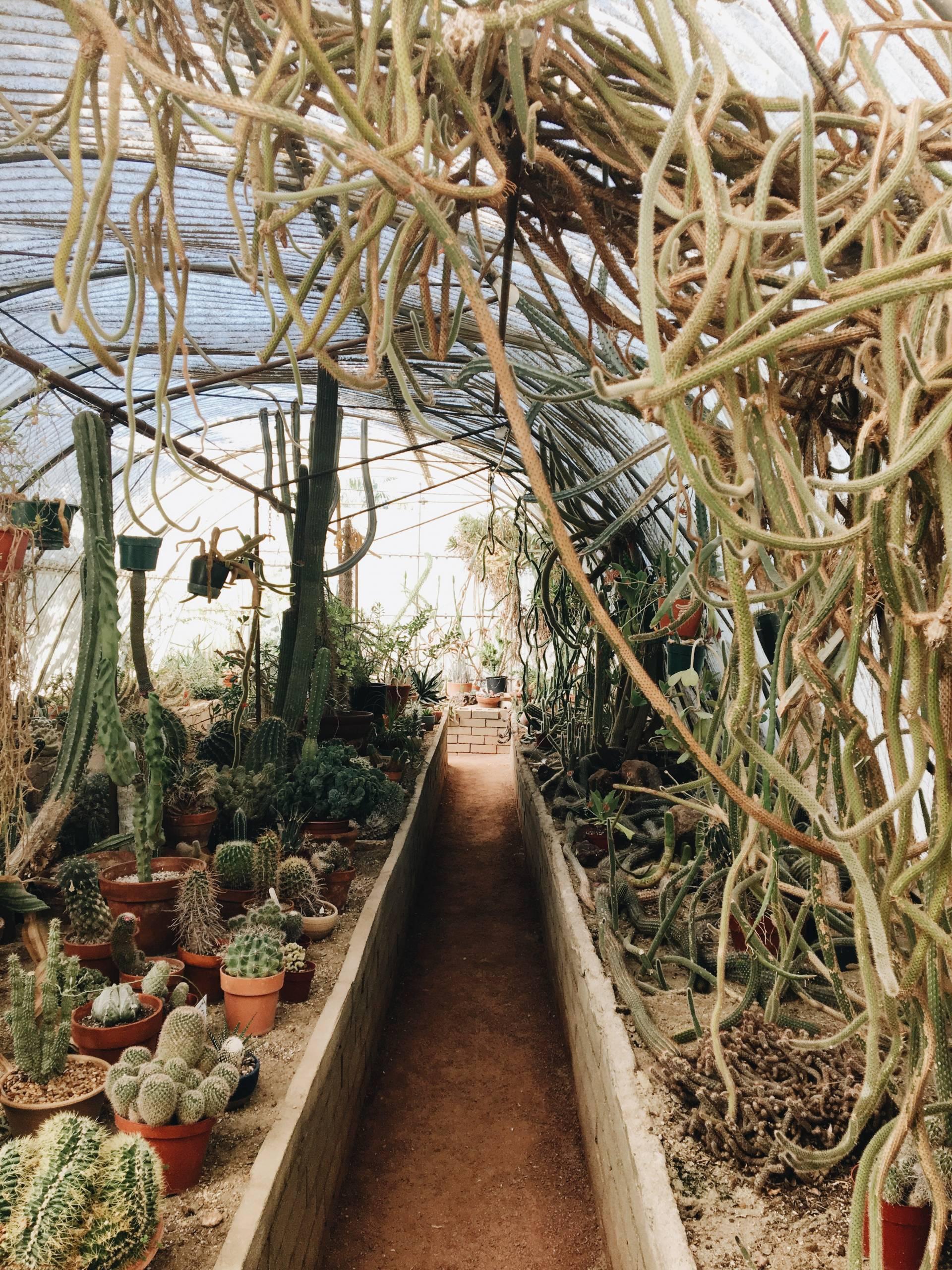 Moorten's Botanical Garden, Palm Springs