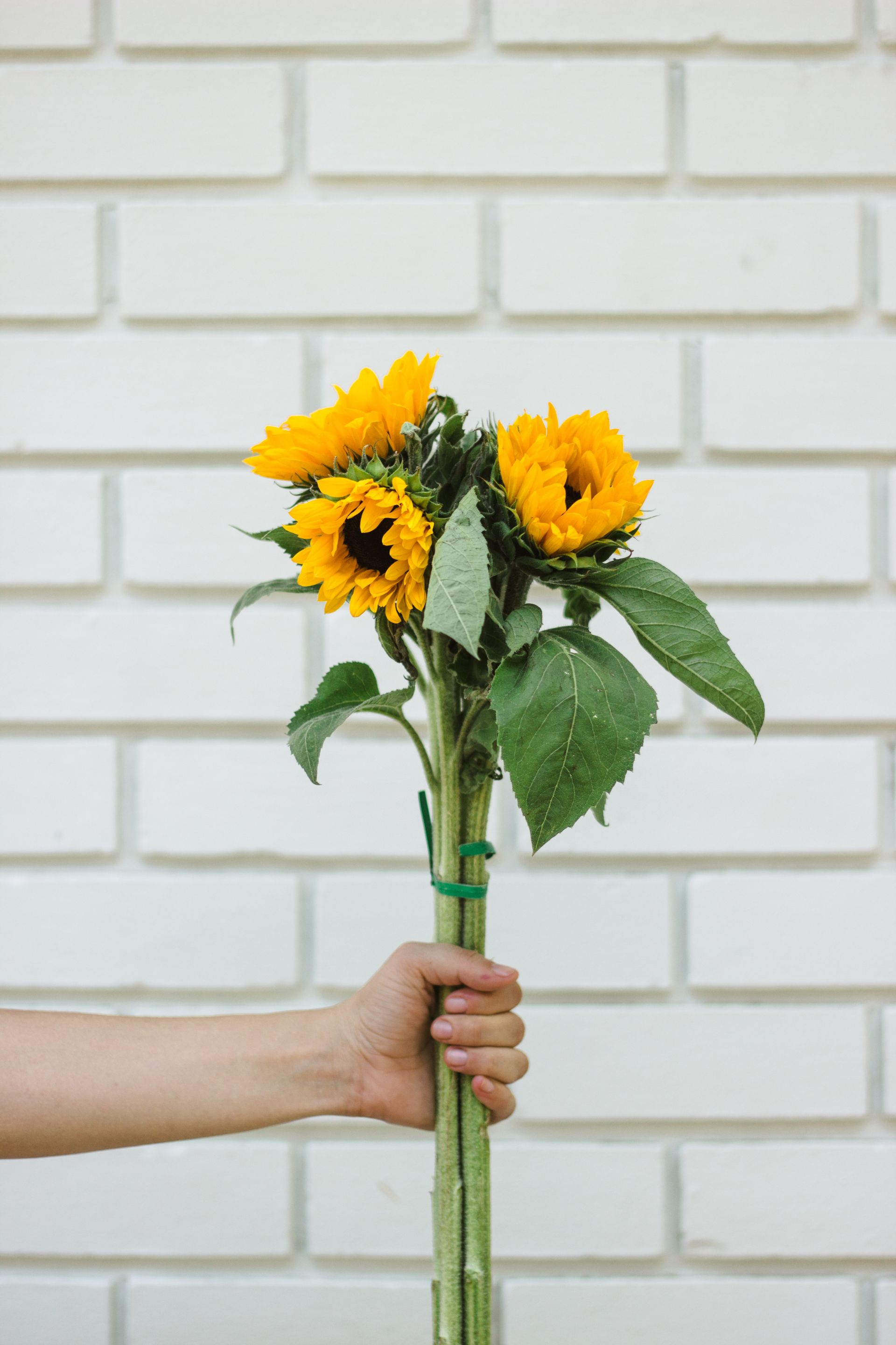 farmer's market sunflowers at temple coffee sacramento for tinted green shot by @sarahakiyama | weekend links v05 sarahmichiko.com